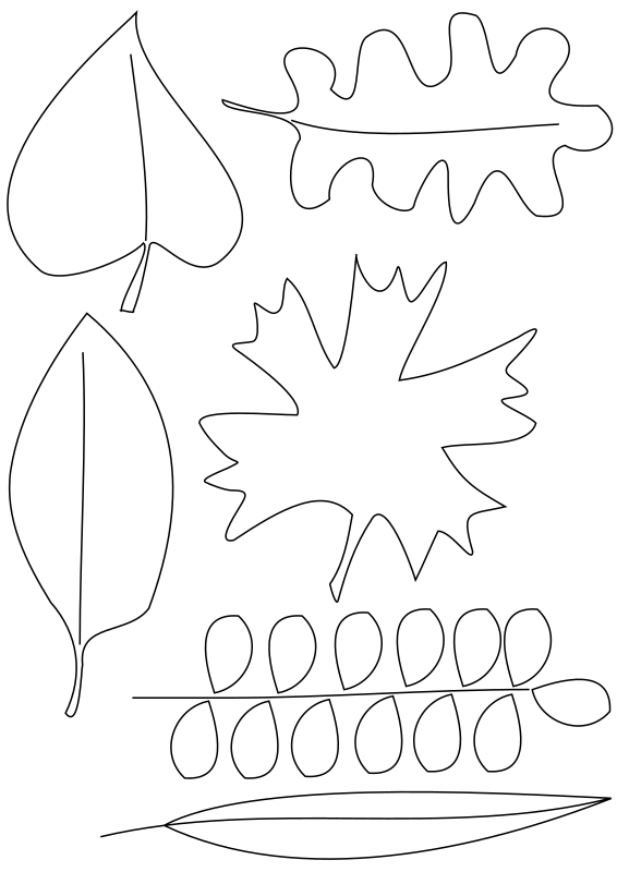 Leafs by Ctibor - Several kinds of leafs