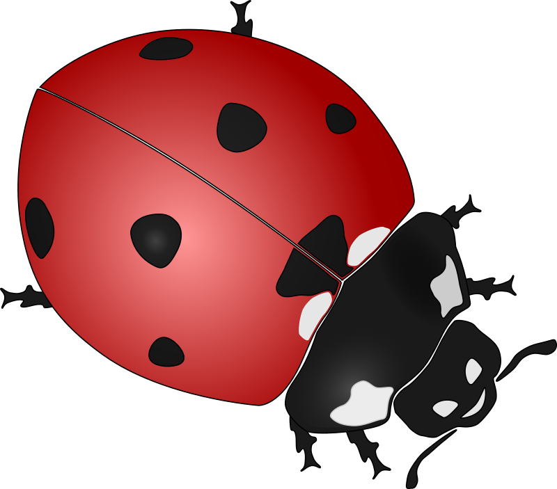 Clipart - ladybug