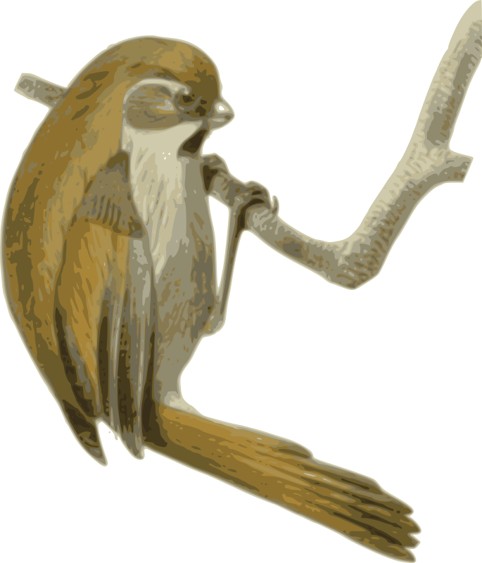 Paradoxornis_verreauxi by yves_guillou - from http://commons.wikimedia.org/wiki/File:Paradoxornis_verreauxi.jpg