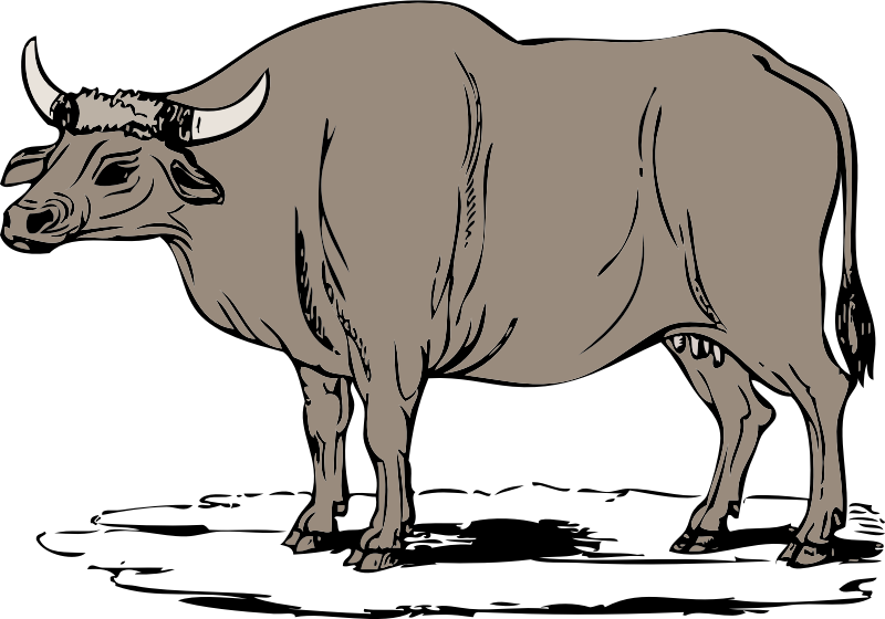 Gaur by johnny_automatic - a large South Asian ox known as the gaur
