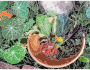 A bowl of flowers, berries and greens />