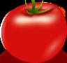 tomato Clipart  Vector