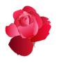 Red Rose />