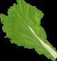 Food Green Leaf