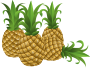 Food Pineapple