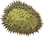 Misc Durian
