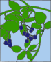 Colored Blackberry motif