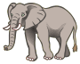 elephant - coloured
