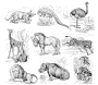 African animals (white background)