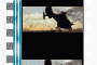 Film Strip (35mm) Dolby SRD Thumbnail