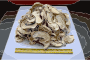 Chinese factory directly supply dry mushroom - Porcini, Shiitake, Champignons Thumbnail