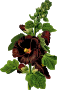 Hollyhock (detailed)