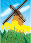 Tulips And Windmill Scene