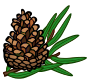 conifer cone - coloured