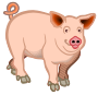 pig - coloured