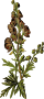 Wolfsbane (detailed)