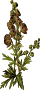 Wolfsbane (smaller file)
