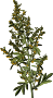 Wormwood (smaller file)