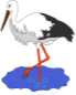 Stork in a pond