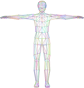 Prismatic Low Poly Human Male Wireframe No Background