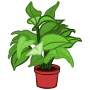 potted plant - coloured