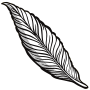 feather - lineart