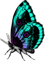 Butterfly 18 (colour 2)