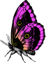 Butterfly 18 (colour3)