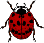 Ladybird (colour)