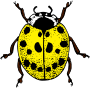 Ladybird (colour 2)