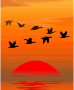 Flying birds Thumbnail