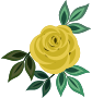 Rose 20 (yellow)