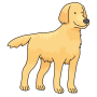 dog - Golden Retriever
