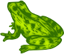Frog 9 (colour)