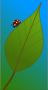 Bug on a Leaf Thumbnail