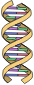DNA Simple
