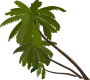 palm_trees Thumbnail