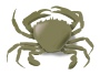 the crab