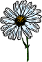 colored daisy 1