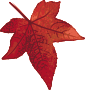 Red maple leaf />