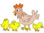 Hen with three chicken />